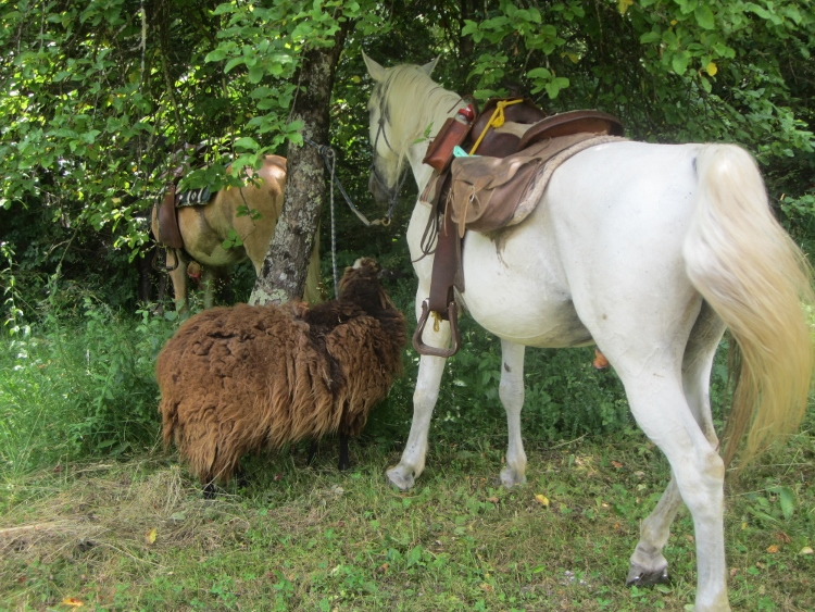soca-horses